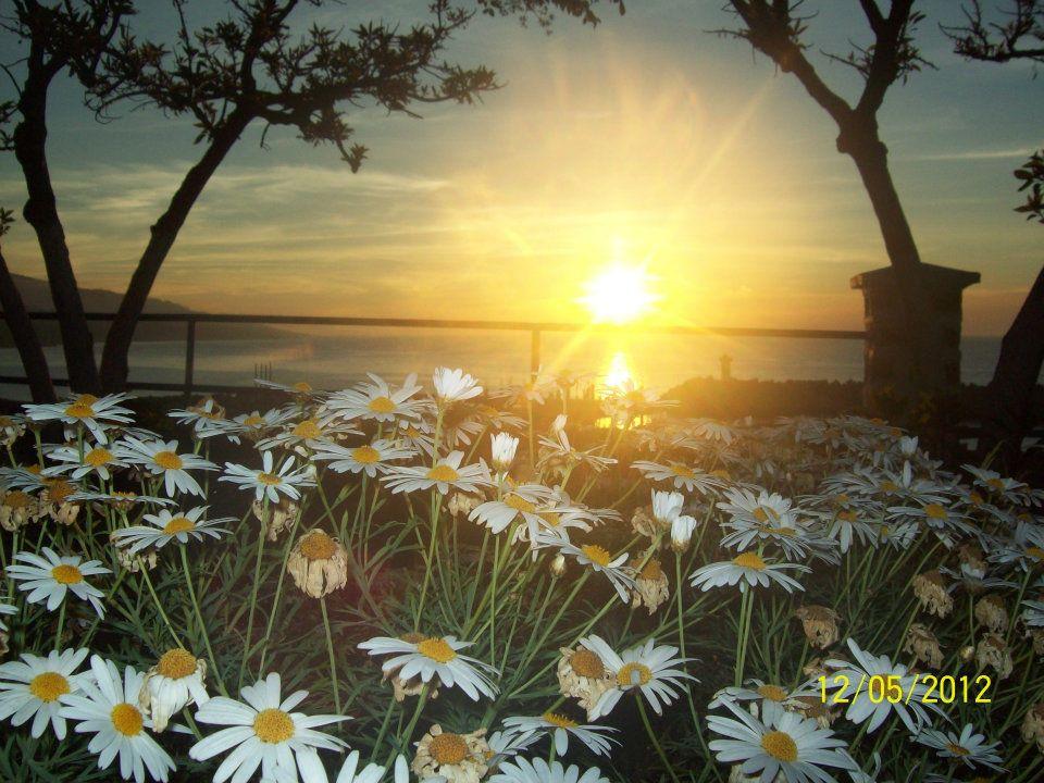 Le printemps. dans POESIES : LE PRINTEMPS. 525475_411602542205129_1616827114_n