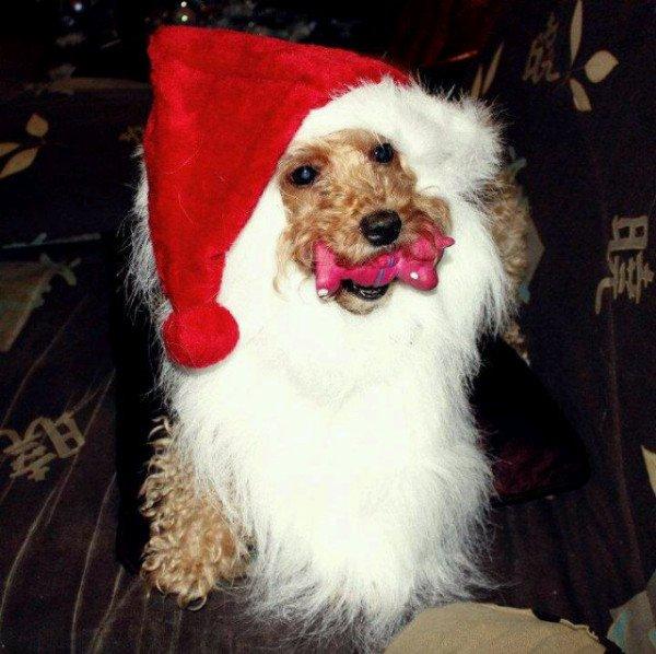 Le Père Noël. dans Images droles. 6861633961