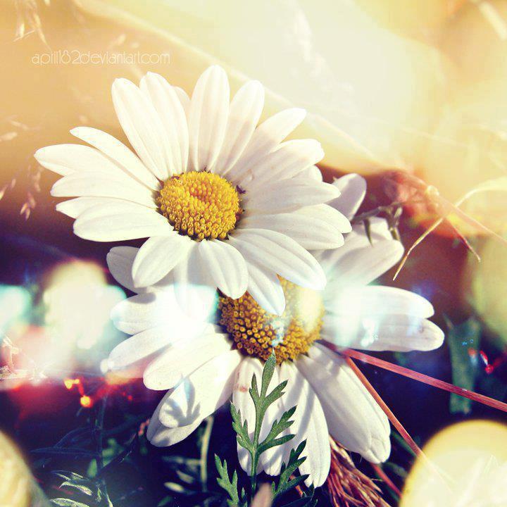 Le printemps. dans POESIES : LE PRINTEMPS. 599171_245854985543710_642955733_n