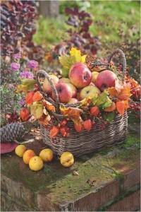 chataigne dessin couleur Lovely Les 27 meilleures images du tableau automne sur Pinterest